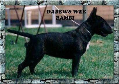Dabews Wee Bambi.jpg