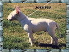 Josh Pup.jpg