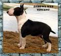 Dabews Wee Vincent.jpg
