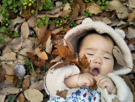 かさかさ落ち葉遊び