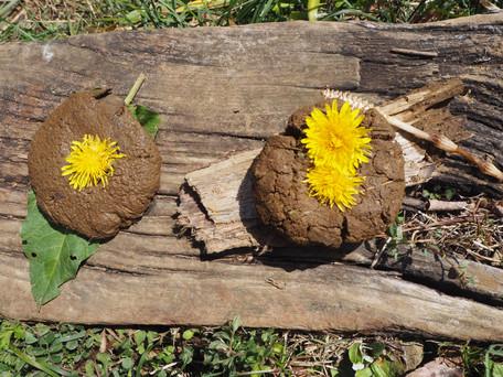 【お知らせ】森のとしょかんは11/25(木)に延期します!通常活動も5月末までお休みしています。
