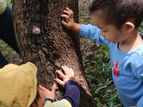 2020.9.17  八王子/お山に登り木に登り