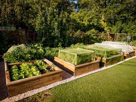 Pěstování bez námahy ve vyvýšených záhonech