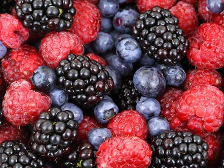 Letní péče o ovocné keře