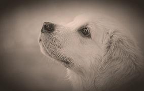 dog-4390885_1920_edited_edited.jpg