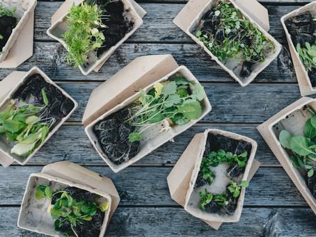 Březen na zeleninové zahrádce