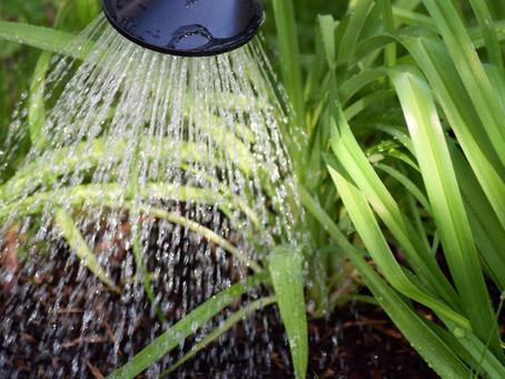Bojujeme proti suchu na zahradě