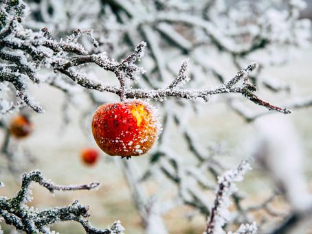 Péči potřebují ovocné stromy i v lednu!