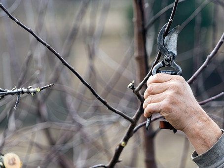 Nebojte se říznout do stromu - je ten pravý čas!