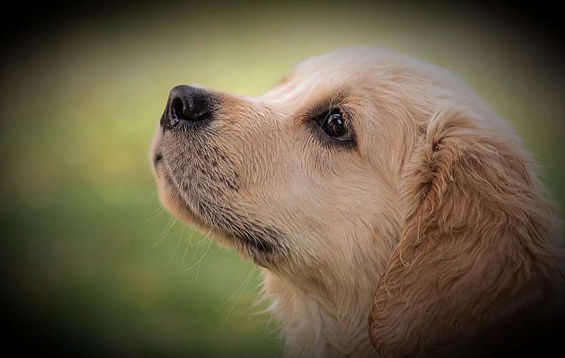 dog-4390885_1920_edited.jpg