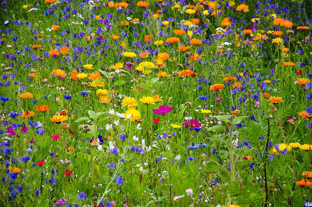 flower-meadow-2509969_1920.jpg