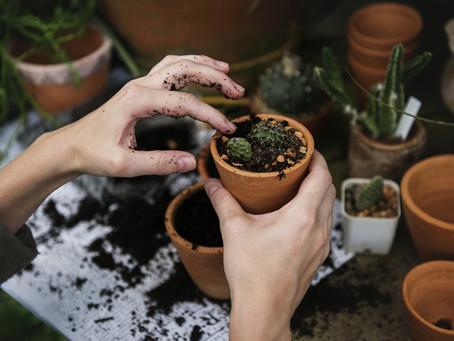 Podzimní péče pro pokojové rostliny