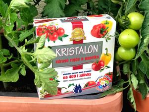 Účinná prevence proti černání rajčat