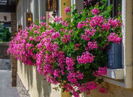 Recept na nejkrásnější rozkvetlá okna v ulici