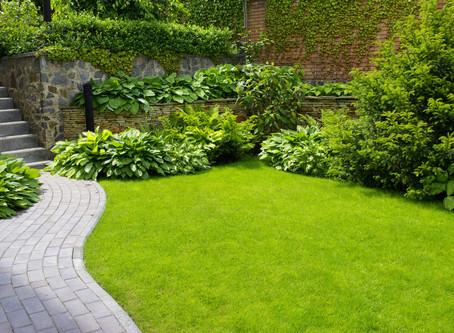 7 kroků pro dokonalý trávník