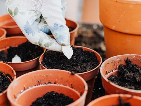 Předpěstování rostlin má své zásady - dodržujete je?