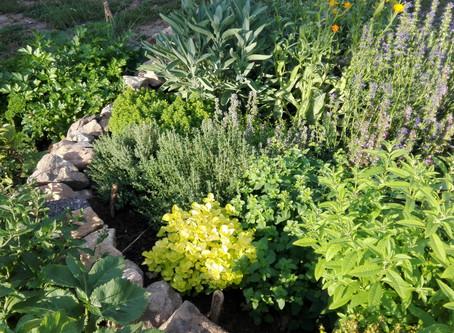 Pěstování bylinek přírodní cestou