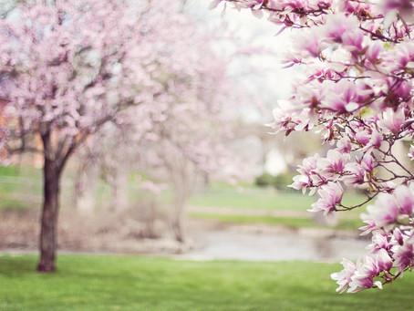 Aprílová okrasná zahrada