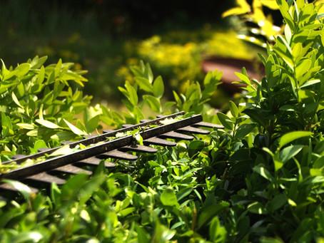 Podzimní sestřih živých plotů