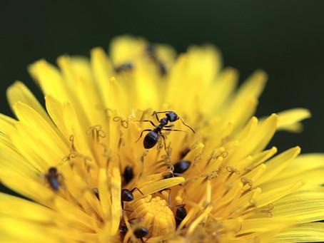 Zbavujeme se mravenců a slimáků šetrně