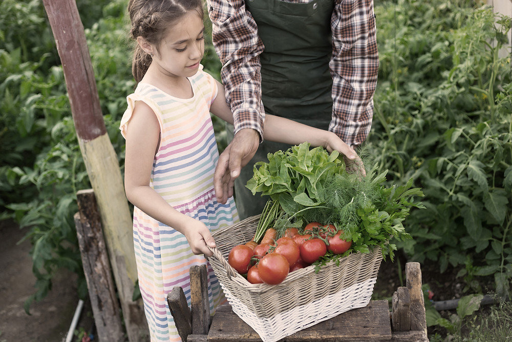 Young girl carrying basket of tomatoes and lettuces with an adult