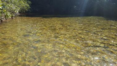 Água do Rio Coxipó do Ouro
