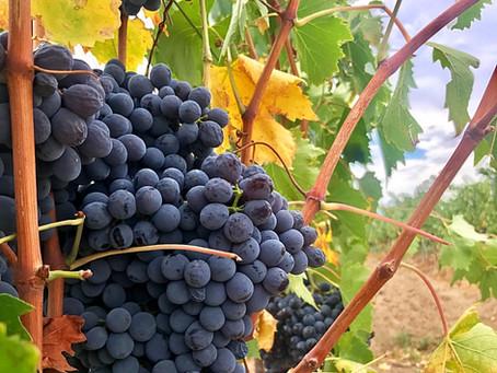 Temecula Wine Country: Barrel Room Especial