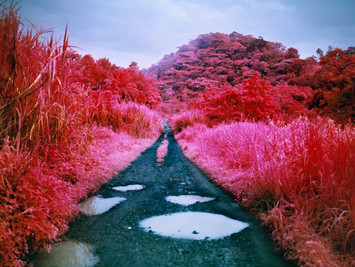 Visions, Decoded #09 - Richard Mosse: The Beasts of All Colours
