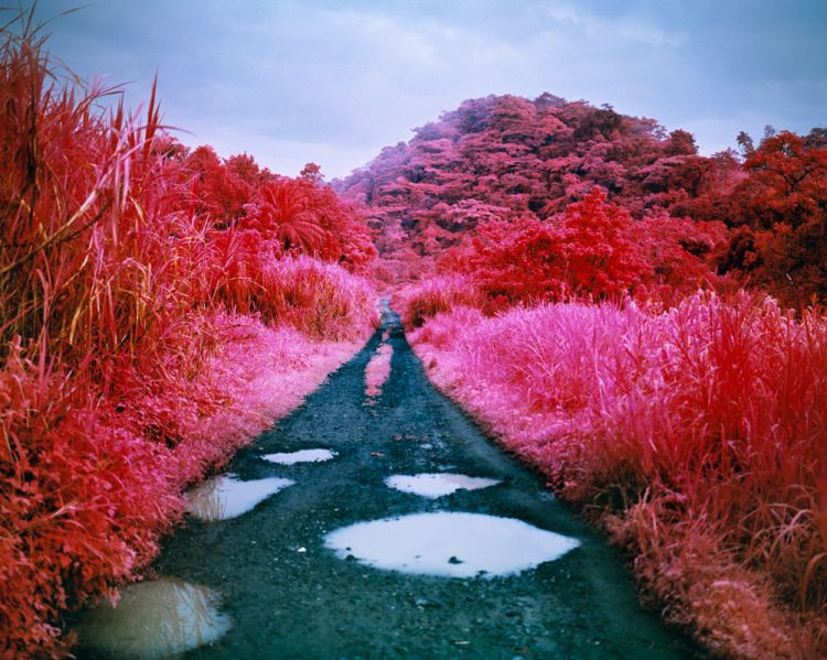 copyright Richard Mosse
