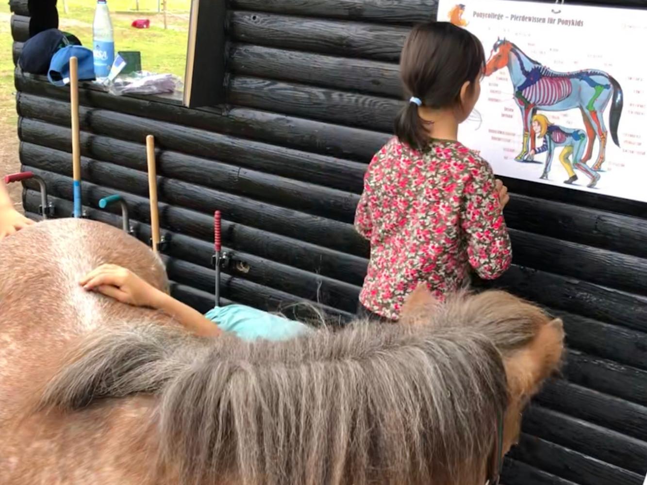 ponycollege-ponynachmittag-160619.jpg