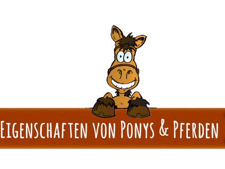 Ponycollege fürs Sofa – Teil #1