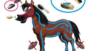 Ponycollege für Zuhaus: Richtig putzen