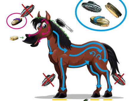 Ponycollege fürs Sofa: Pferde und Ponys richtig putzen