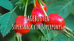 Hagebutten – Superfood für super Ponys