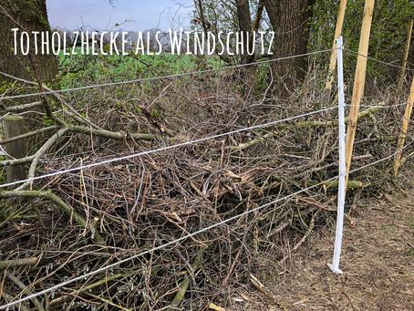 Eine Totholzhecke für mehr Windschutz