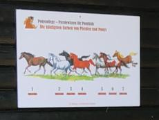 Ponycollege-Ponynachmittag-1906028.jpg