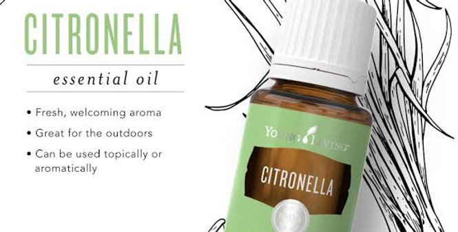 Citeonella essential oil 5ml