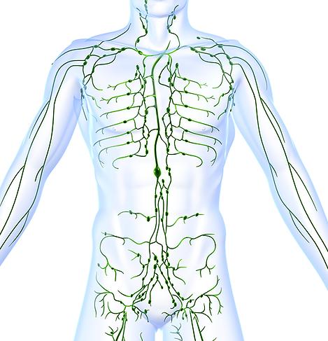 Lymphatic-system-ThinkstockPhotos-115918