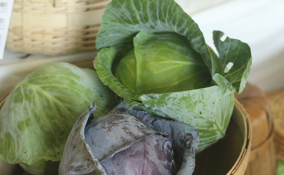 Local Cabbage