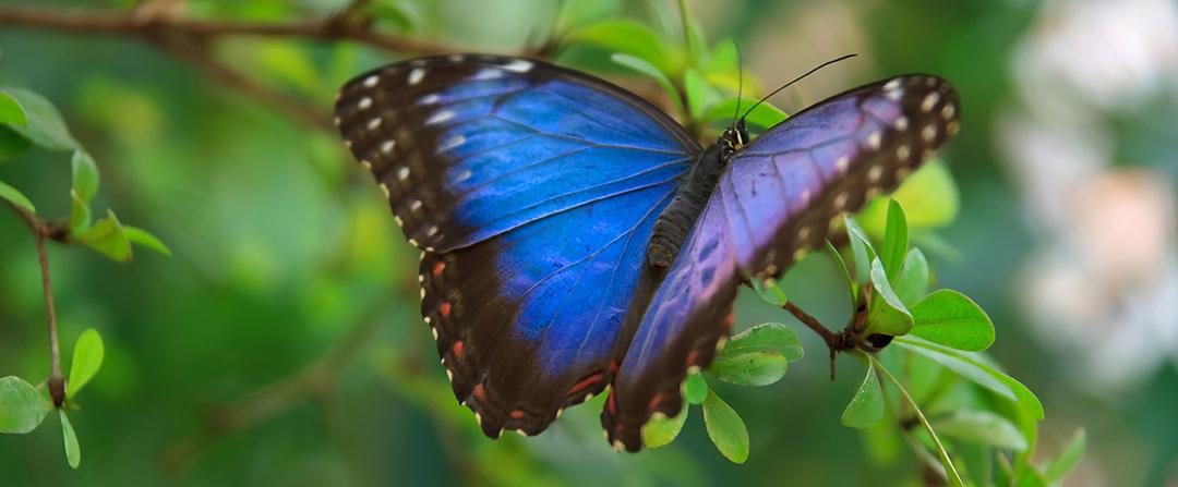 Butterfly_test