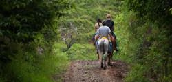 Resized horses