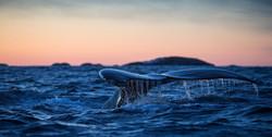 Atlantic-Ocean-Whale-Tail
