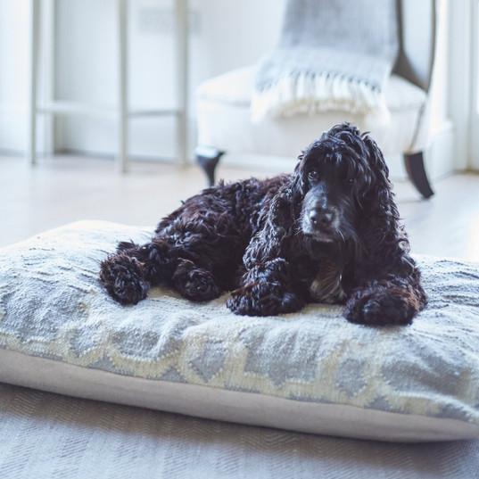 Dog Bed Smoke