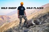 Wild Sheep, Wild Places. A Sheep Story