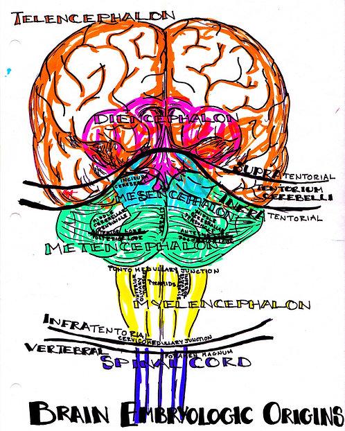 Embryology E-book