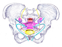 operative pelvic anatomy