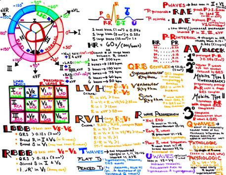 EKG Cheat Sheet   EKG Study Guide   Hanson's Anatomy