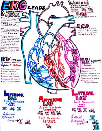EKG and the coronary arteries