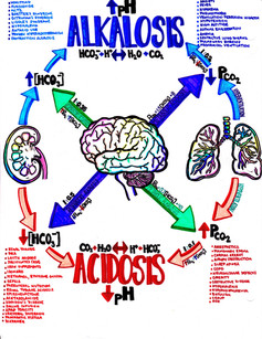 balancing acids and bases in the body