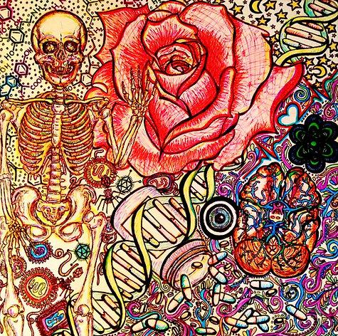 Hanson's Anatomy COMPLETE E-book (electronic version)
